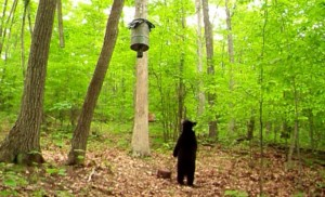 bear feeder PIC 15